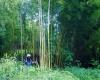 Unterwegs-im-größten-Bambuswald-Österreichs-©-Wolfgang-Muhr