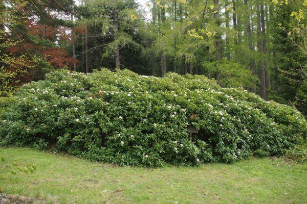 Die Pflanze trägt einmal jährlich 40.000 Blüten ©Wolfgang Muhr