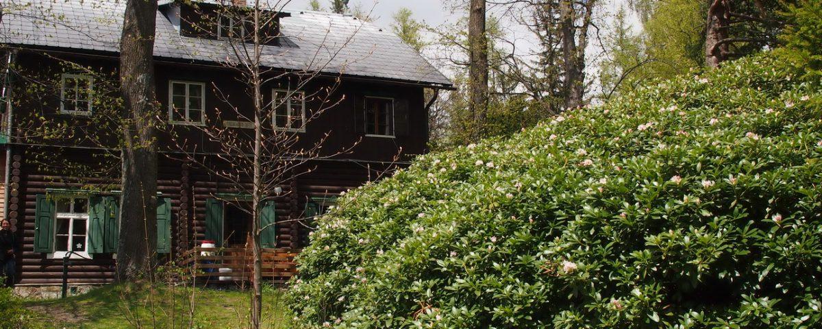 Der Rhododendron hinter der Speckbacher Hütte ©Wolfgang Muhr .JPG